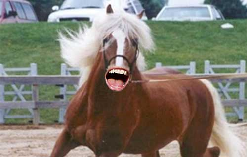 Five Horses With Ricky Gervais Mouth You Must See Before